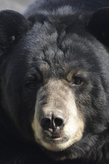 Bear - Good Morning