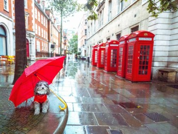 Assaf Frank - Dog with umbrella on London city street