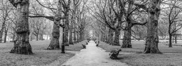 Assaf Frank - Avenue of trees, Green Park, London, FTBR-1839