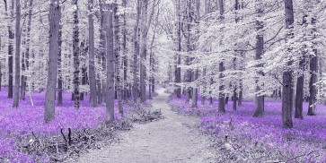 Assaf Frank - Path through bluebell forest, FTBR 1848