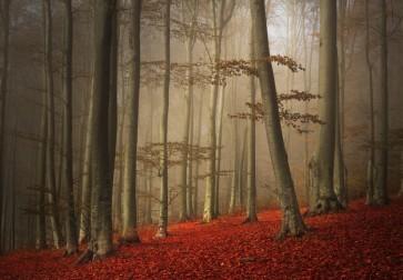 Brian Kurts - Forest Mist