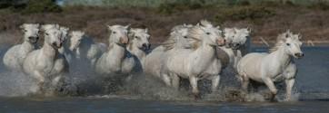 Jocelyn Borivoj - Horses - Running