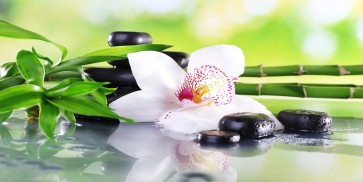 Omar Olavi - White Lily, Bamboo Branches