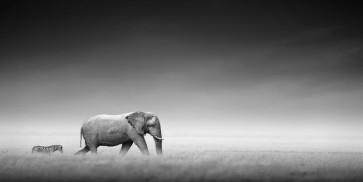 Felicia Roy -Elephant and Zebra Walking