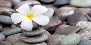 Omar Olavie - White Frangipani On Stack of Rocks