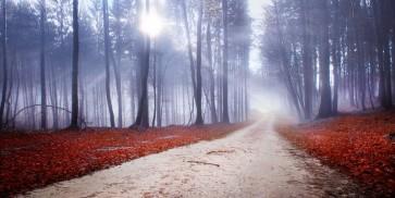 Brian Kurts - Mystic Forest