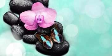 Omar Olavi - Orchid and Butterfly