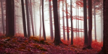 Brian Kurts - Magical Red Forest