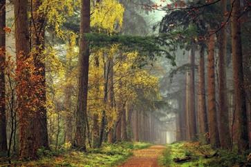 Lars Van de Goor - Colors of the Forest