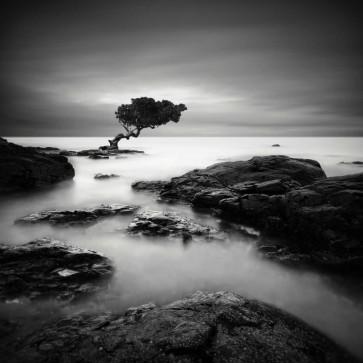 Rob Cherry - Tree Of Temptation