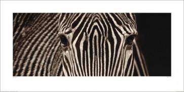 Marina Cano - Zebra Grevy