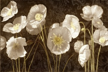 Ives Mccoll - Baroque Poppies