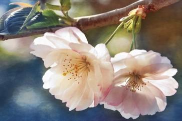 Leda Robertson - Cherry Blossom II