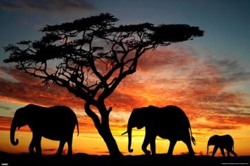 Elephant Love Sunset