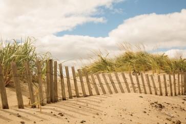 Pela Studio - Beach Dunes I