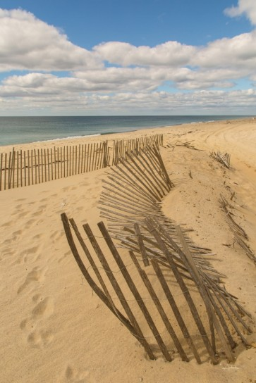 Pela Studio - Beach Dunes II