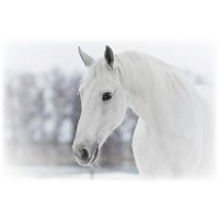 Horse - After the Snowstorm