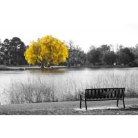 Karina Zampini - Yellow Tree View From Bench
