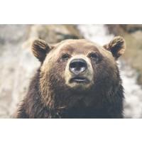 Bear - Just Woke Up