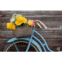Bicycle - Flower Morning