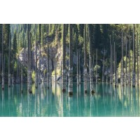 British Columbia - Flooded Forest by the Mountain