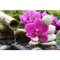 Omar Olavie - Water Source With Orchids