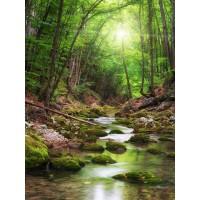 Renée Pehr - Forest River I