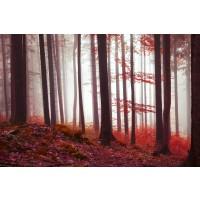 Brian Kurts - Fall Sunrise In Forest III