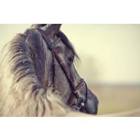 Edith Leanne - Horse - Morning Wanderer