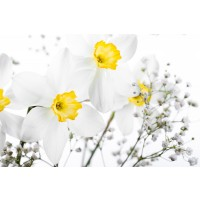 Bouquet of White and Yellow Narcissus