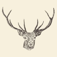 Deer - Hand drawn