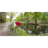 Assaf Frank - Bicycle with bunch of red roses by the canal