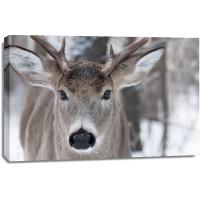 Deer - Wandering