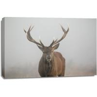 Deer - Wandering in the Mist