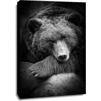 Bear - Anticipation