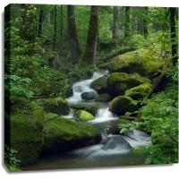 Renée Pehr - Forest River III