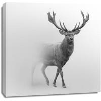 Foggy Wildlife - Caribou