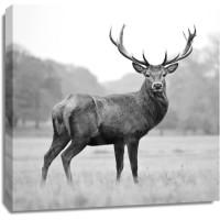 Deer - Proud