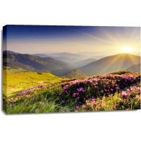 Alan Tully - Purple Flowers Sunrise