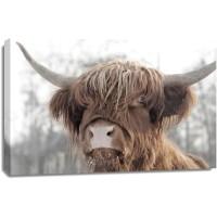 Cow - Frosty Irish Bovine