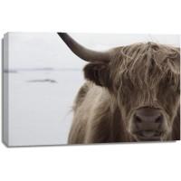 Cow - Irish Mate