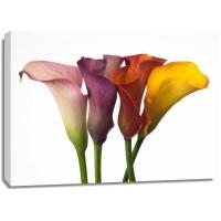 Assaf Frank - Four calla lilies