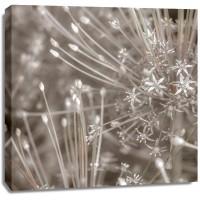 Assaf Frank - Silver Alliums