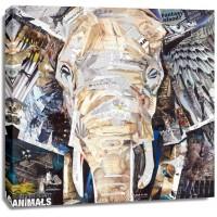 James Grey - Elephants Gaze