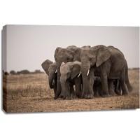 Eddie Soloway - Elephant Family