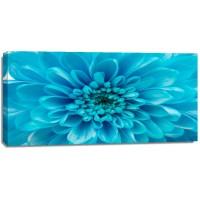 Amanda Raynold - Blue Chrysanthemum