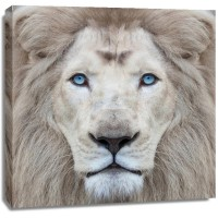 Clemen Kustas - White Lion With Blue Eyes Portrait