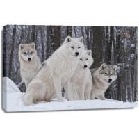 Carina Siegbert - Artic Wolf Pack