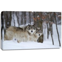 Carina Siegbert - Timber Wolves In Winter