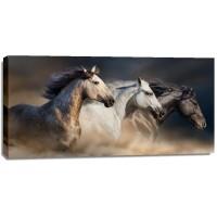 Edith Leanne - Horses - Run Gallop In Desert